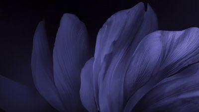 Vivo Stock, Flower, Black background, Dark, Android 10