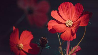 Orange flowers, Summer, Blossom, Bloom, Aesthetic