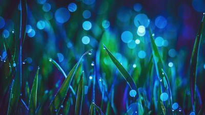 Landscape, Grass, Bokeh, Dew Drops, Macro, Aesthetic