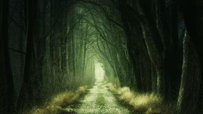 Forest, Path, Fall, Calm, Green, 5K
