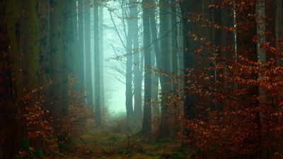 Forest, Fall, Autumn, Foggy, Morning, Atmosphere, Mist