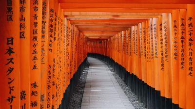 Fushimi Inari Taisha, Shrine, Kyoto, Japan, Orange