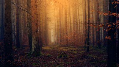 Forest, Autumn, Fall foliage, Mist, Foggy, Dark, 5K