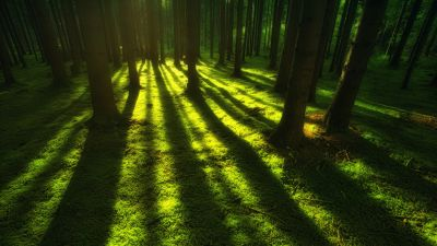 Forest, Trees, Shadow, Daylight, Green, Shadow