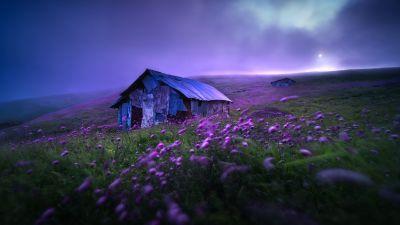Landscape, Spring, Violet flowers, Scenic, Morning, Fog, Scenery, 5K, 8K