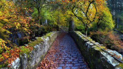 Old Bridge Over River Braan, Hermitage, Dunkeld, Scotland, Autumn trees, Fallen Leaves, Scenery, Pathway, 5K