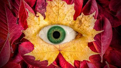 Autumn leaves, Eye, Surreal, Maple leaves, Macro, Leaf Background, 5K