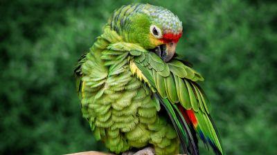 Parrot, Green background, Bokeh, Tree Branch, Selective Focus, Portrait, Bird, 5K
