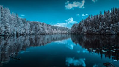 Forest, Infrared vision, Blue Sky, Mirror Lake, Reflection, Body of Water, Landscape, Pine trees, 5K, 8K