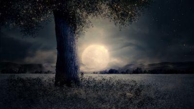 Full moon, Night view, Landscape, Surreal, Fairy tale, Wood, Mystic, Trunk