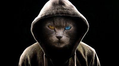 Scary Cat, Hoodie, Animal Portrait, Black background, Pet