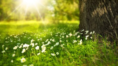 Tree Trunk, Meadow, Greenery, Sunlight, White flowers, Selective Focus, Grass, Wood