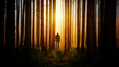 Silhouette, Aesthetic, Man, Standing, Sunset, Forest, Woods, 5K
