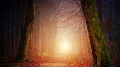 Forest, Dirt road, Foggy, Autumn, Fall, Morning light, 5K