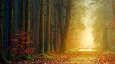Forest, Dirt road, Autumn, Fall, Foliage, Light, Foggy