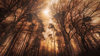 Woods, Forest, Tall Trees, Fire effect, Landscape, Digital composition, 5K