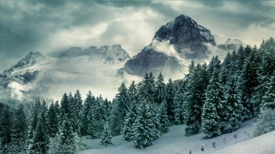 Forest, Mountains, Pine trees, Winter, Peak