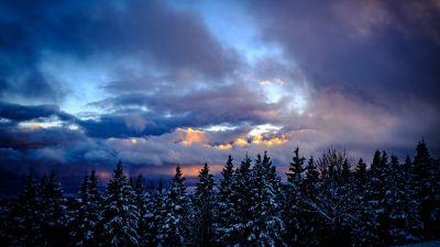 Snowy Trees, Winter, Cloudy Sky, Dusk, Scenic, 5K