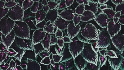 Leaf Background, Texture, Plants, Garden, 5K