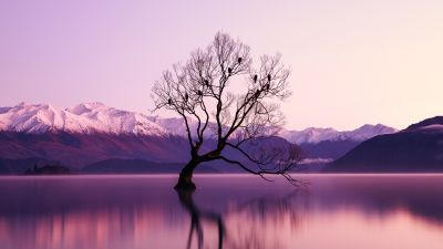 Withered Tree, Glacier mountains, Snow covered, Dusk, Mountain range, Landscape, Scenery, Long exposure, Body of Water, Reflection, 5K