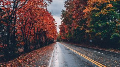 Autumn trees, Foliage, Seasons, Fall, Empty Road, Landscape, Scenery, 5K