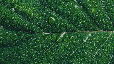 Green leaf, Water drops, Closeup, Macro, Pattern, Leaf Background, Greenery, Texture