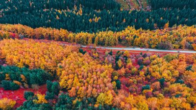 Autumn trees, Foliage, Aerial view, Forest, Colorful, Road, Countryside, Fall, Scenery, Landscape