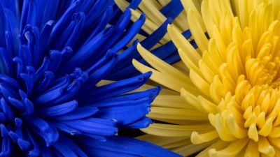 Blue flower, Yellow flower, Closeup, Macro, Blossom, Bloom, Spring, Floral Background, Petals, 5K