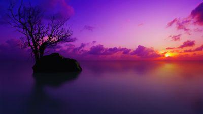 Maldives, Sunset, Lone tree, Purple sky, Clouds, Sun, Dusk, Vivid