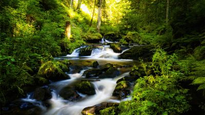 Black Forest, Tropical forest, Waterfall, Long exposure, Landscape, Stream, Green, Scenic