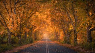 Autumn trees, Road, Autumn colors, Fall Foliage, Tarmac, 5K, 8K