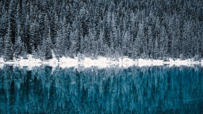 Lake Louise, Winter, Cold, Reflections, Pine trees, Frozen, Snow covered, Turquoise water, Banff National Park, Canada