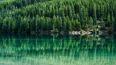 Green Trees, Pine trees, Reflections, Lake, Tranquility, Aesthetic, Banff National Park, Alberta, Canada, Landscape, Scenery