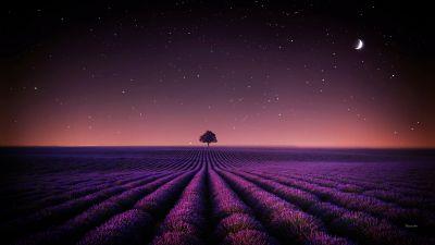 Lavender fields, Solitude Tree, Crescent Moon, Stars, Night sky, Horizon, Pattern, Landscape, Scenery, 5K