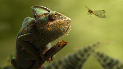 Chameleon, Dragonfly, Portrait, Blurred, Green background, Leaves, HDR