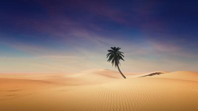 Palm tree, Desert, Sand Dunes, Clear sky, Shadow, Sunny day