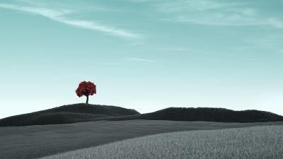 Lone tree, Clear sky, Surreal, Dry fields, Landscape