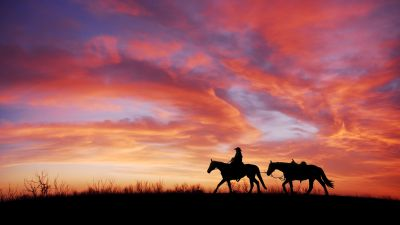 Cowboy, Horses, Silhouette, Dawn, Sunset