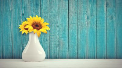 Sunflowers, Flower vase, Wooden background, Teal