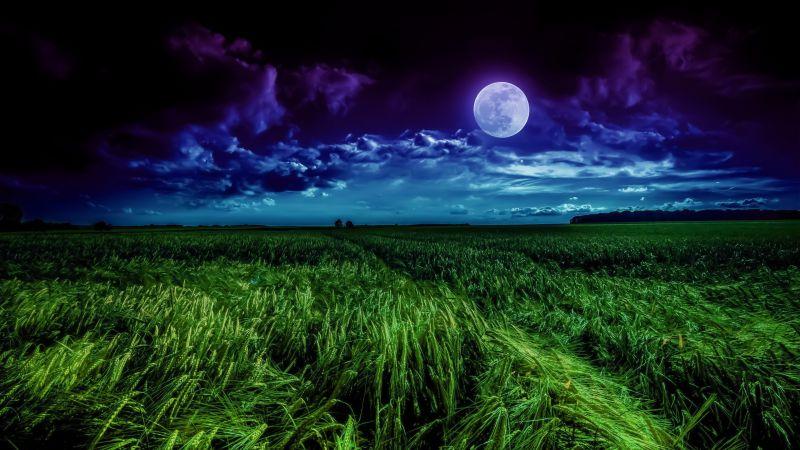 Moon, Landscape, Night, Field, Cloudy, Wallpaper