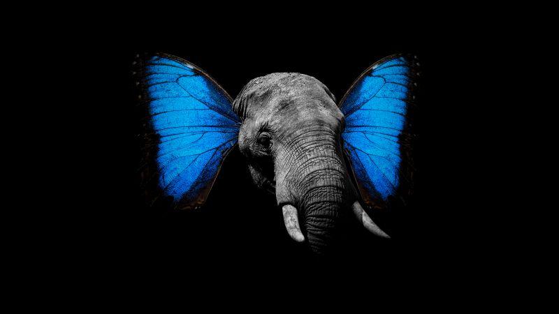 Elephant, Butterfly, Black background, Wallpaper