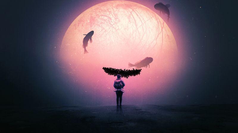 Alone, Surreal, Dream, Fishes, Moon, Travel, Explorer, Wallpaper