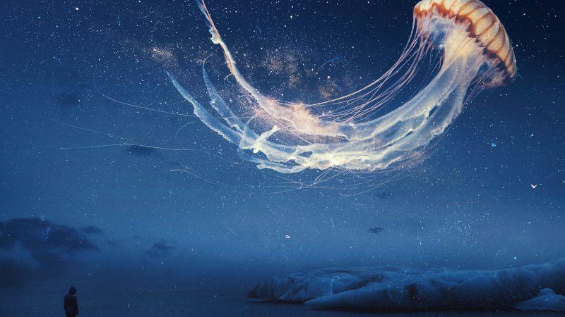 Jellyfish, Dream, Surreal, Night sky, Alone, Wallpaper