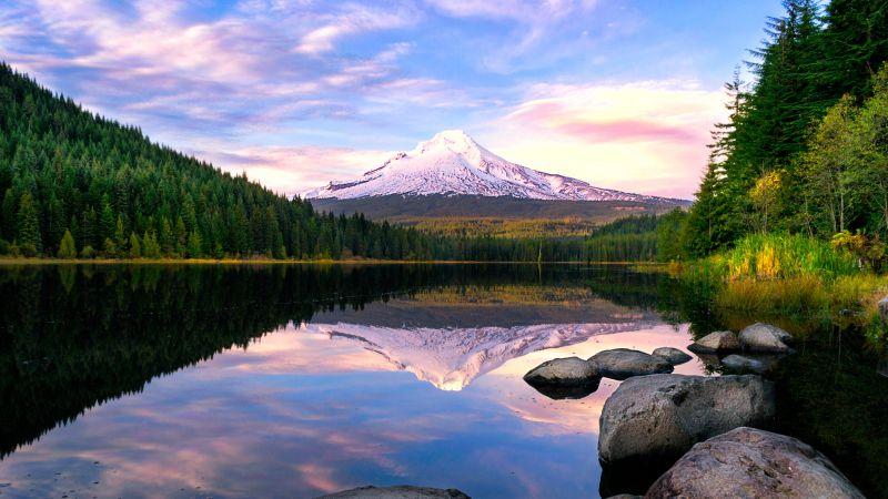 Trillium Lake, Mount Hood, Pine trees, Forest, Reflection, Oregon, USA, Wallpaper