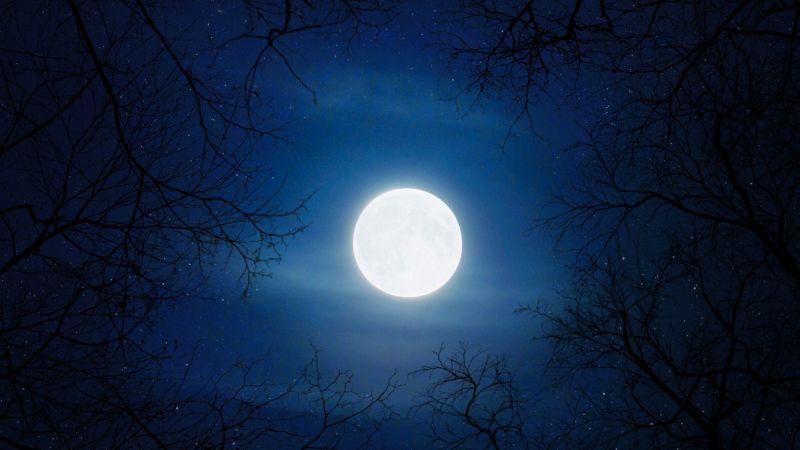 Moon, Night, Cold, Trees, Blue Sky, Full moon, Wallpaper