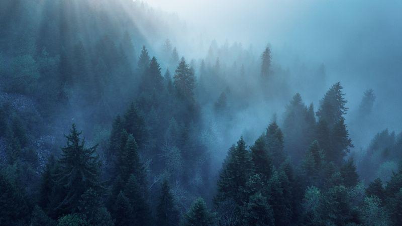 Forest, Rhone-Alpes, Sunlight, Morning fog, Blue, Ambiance, Wallpaper