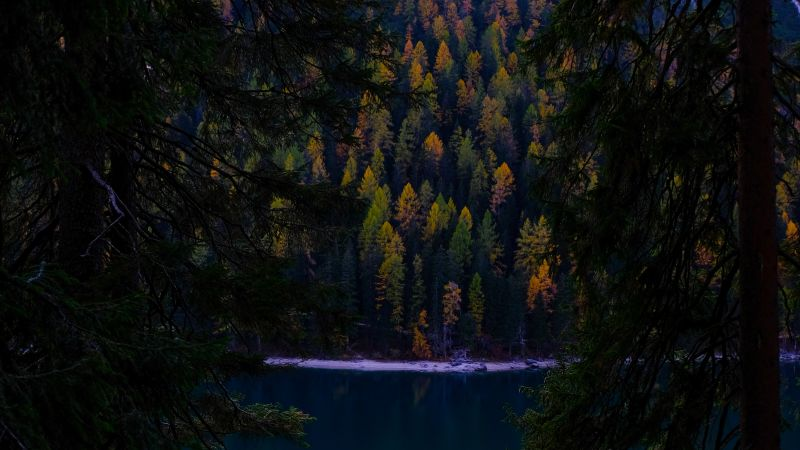 Lake, Forest, Wilderness, Pine trees, Cold, Evening, Wallpaper
