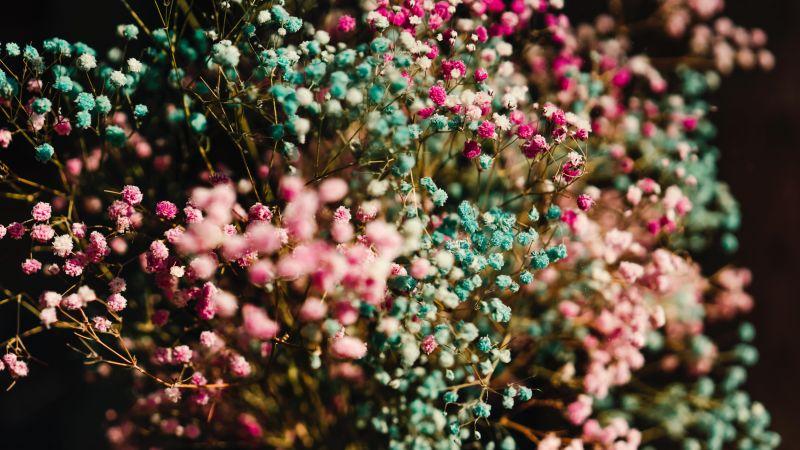 Colorful flowers, Flower bouquet, Blossom, 5K, 8K, Wallpaper