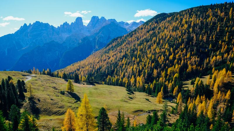 Landscape, Forest, Mountains, Sunny day, Autumn, 5K, Wallpaper
