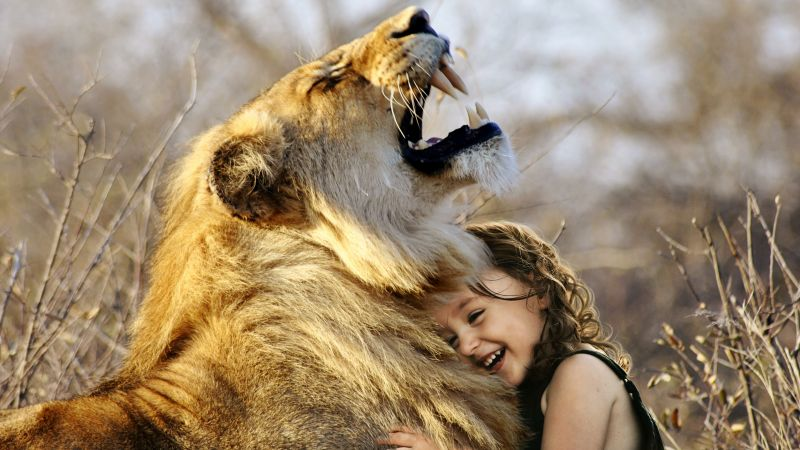 Lion, Cute Girl, Cute child, Laughing, Roaring, Wild, Adorable, Wallpaper